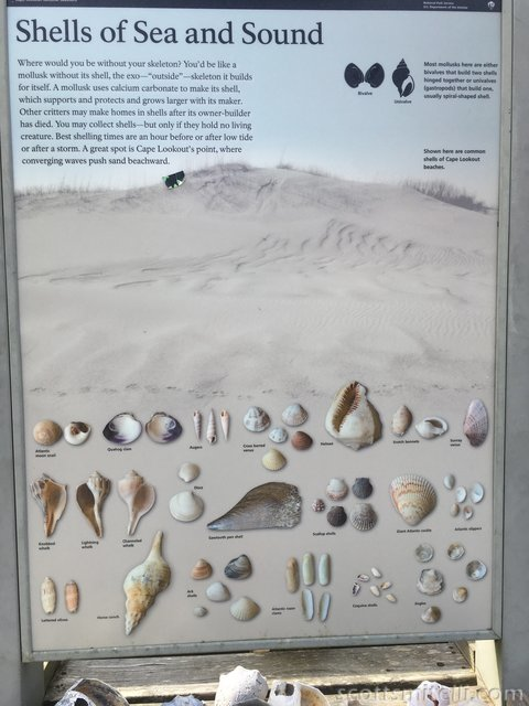 Shells of Sea and Sound