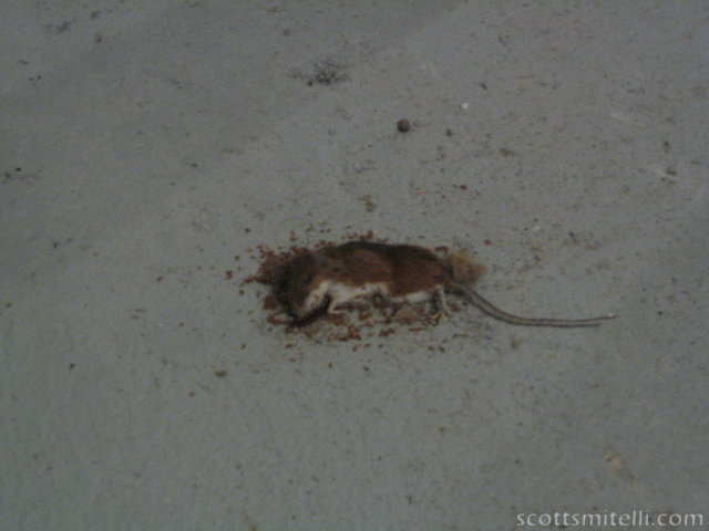 A dead mouse in Angelo's basement
